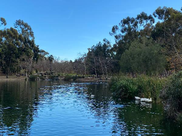 Duck duck swan (not)